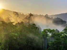 Spreekbeurt over het regenwoud