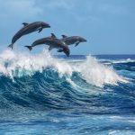 spreekbeurt over dolfijnen