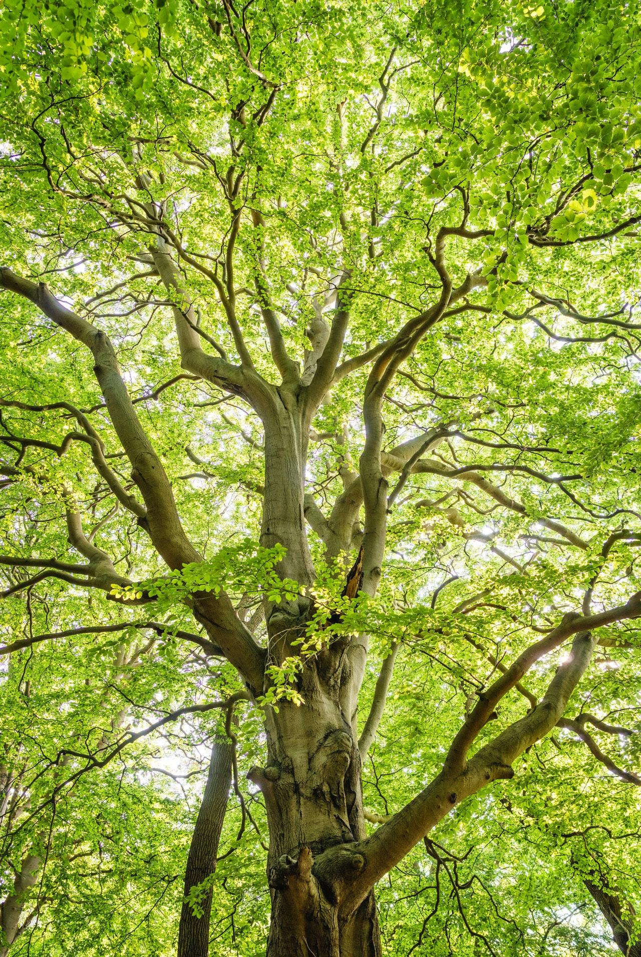 Bomen en Boombladeren
