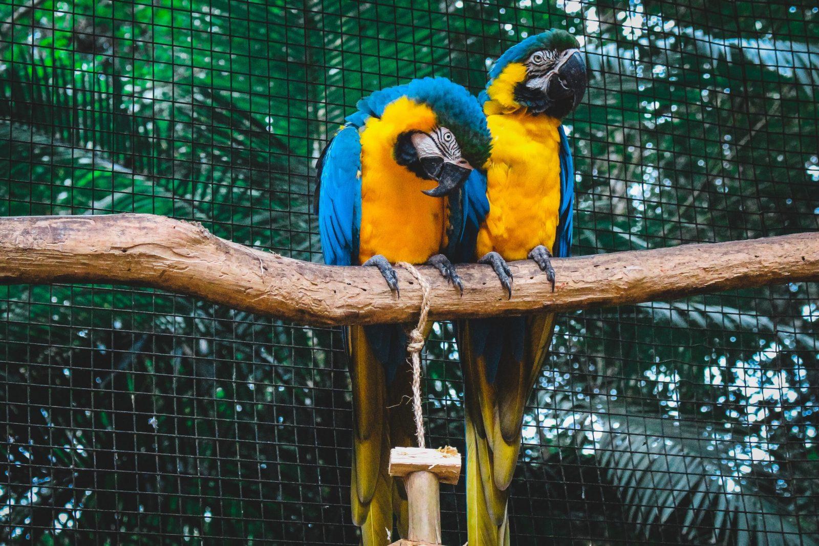 Vogelbescherming