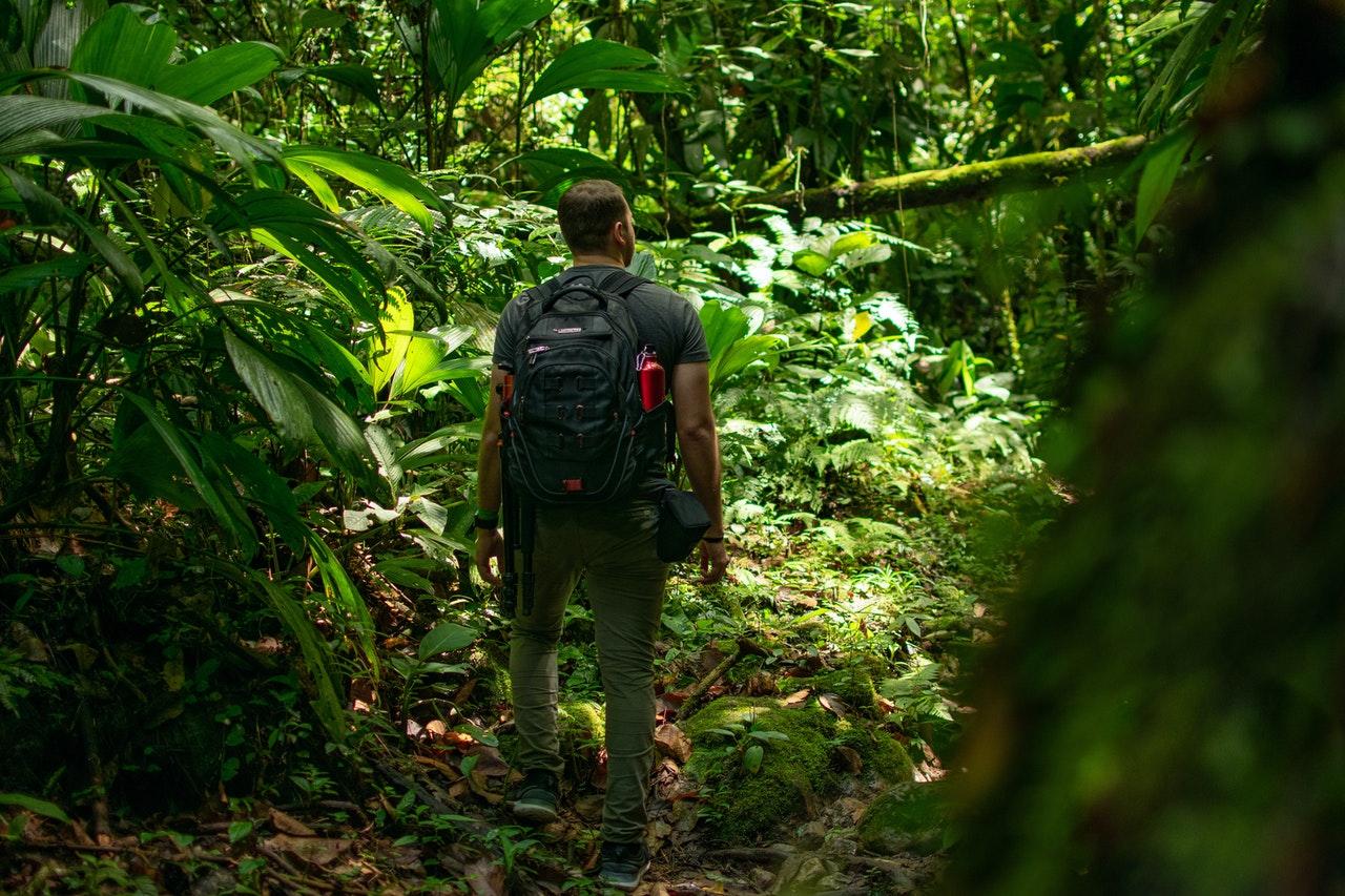 het Regenwoud